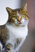 Green-eyed cat 4 — Stock Photo