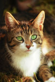Green-eyed cat 2 — Stock Photo