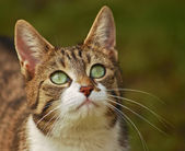 Green-eyed cat 1 — Stock Photo