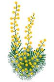 Mimosa — Stock Vector