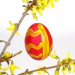 Royalty-Free Stock Photo: Forsythia with easter egg