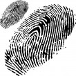 Royalty-Free Stock Vector Image: Fingerprint