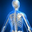 Foto Stock: Skeletal back