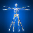 Royalty-Free Stock Photo: Skeleton - da vinci style