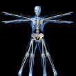Skeleton - da vinci style — Stock Photo