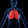 Highlighted lung — Stock Photo #2627146