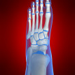 Skeletal foot — Stockfoto