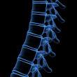 Stock Photo: Part of humspine