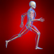 Stock Photo: Running skeleton
