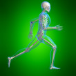 Running skeleton — Stock Photo