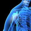 Royalty-Free Stock Photo: X-ray shoulder