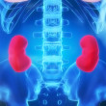 Human kidneys — Stock Photo