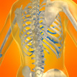 Stockfoto: Skeletal back