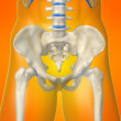 Skeletal hip — 图库照片