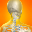 Skeletal back — Stockfoto