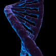 dna model — Stock Photo #2628066