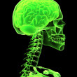 X-ray head with brain — Stock Photo
