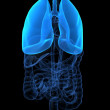 Highlighted lung — Stock Photo #2628230