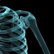 Skeletal shoulder — Foto de stock #2628675