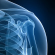 Skeletal shoulder — Foto Stock