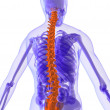 Highlighted spine — Stockfoto