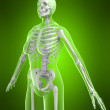 Female skeleton — Stockfoto