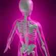 Skeletal back — Stock Photo #2629946