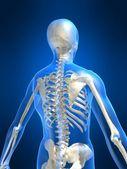 Skelettet tillbaka — Stockfoto