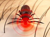 Tick bite — Stock Photo
