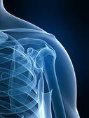 скелетные плеча — Стоковое фото