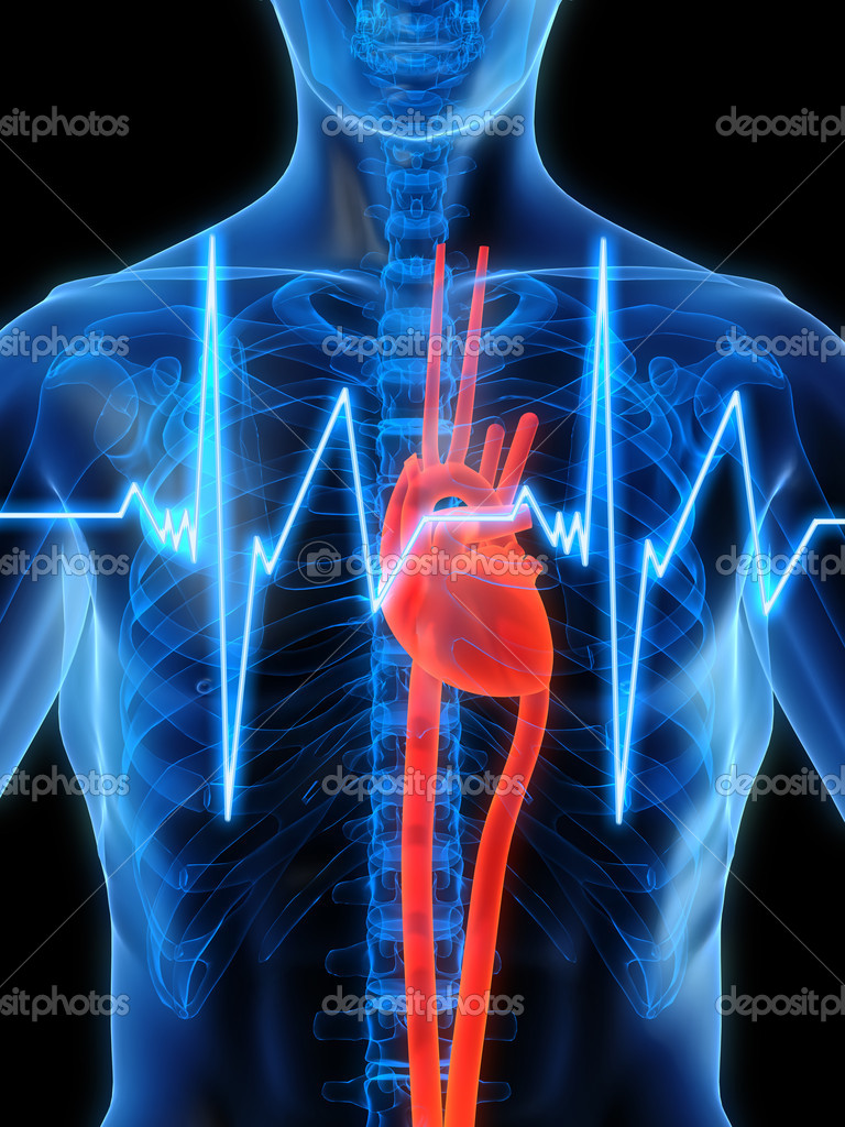 3d rendered illustration of a human anatomy with heartbeat — Stock Photo #2627522