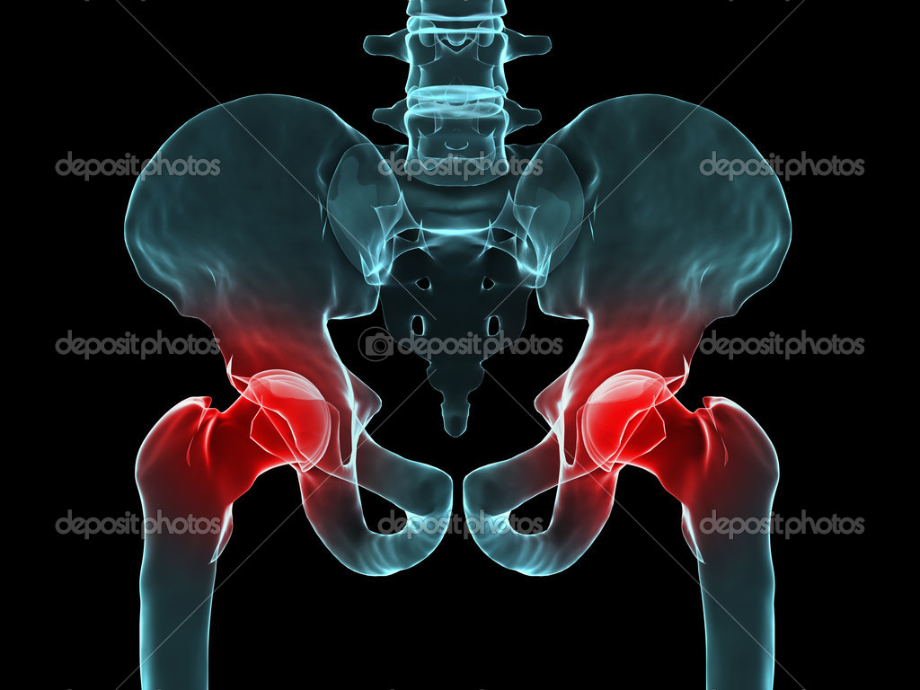 3d rendered of a human skeletal hips with highlighted joint — Photo #2629200