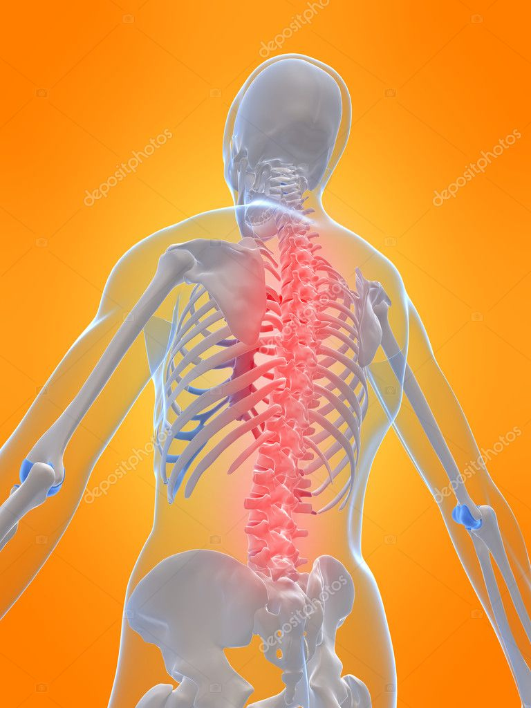 3d rendered illustration of a human skeleton chest with highlighted spine — Stock Photo #2629454