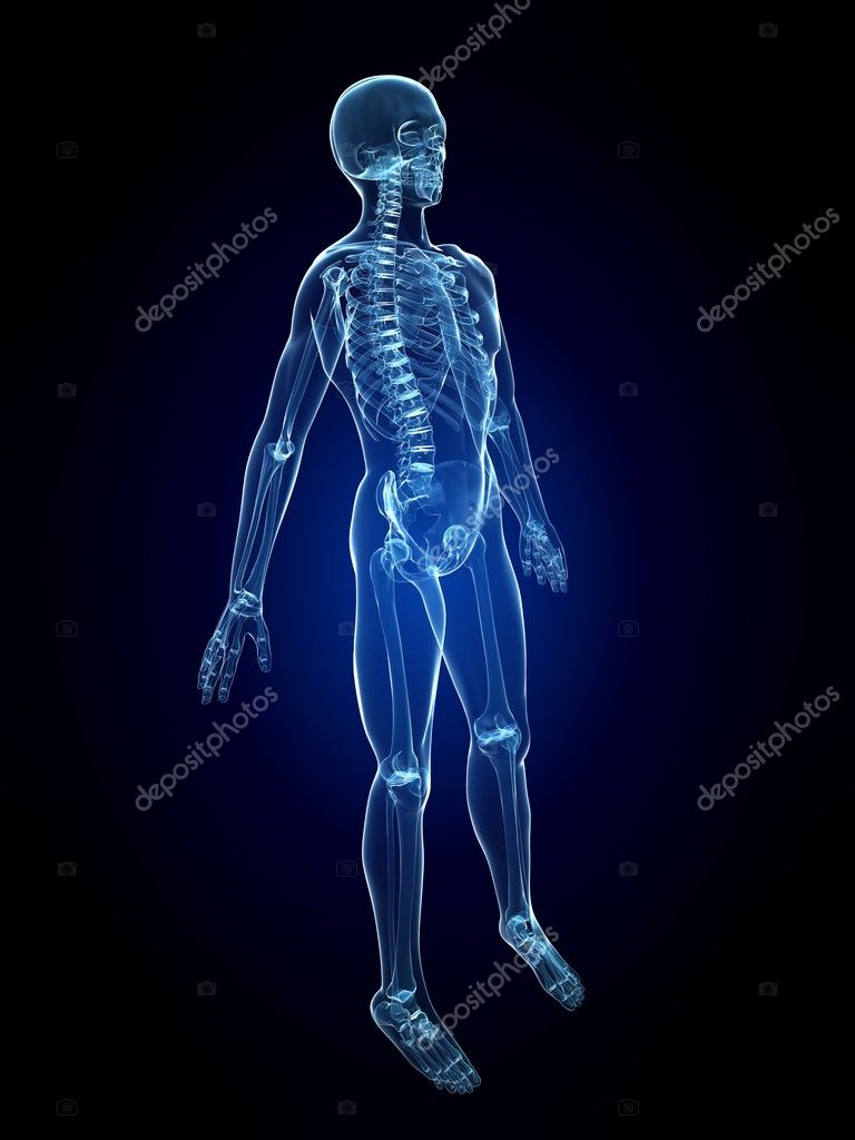 3d rendered illustration of a human skeleton  — Stock Photo #2629525