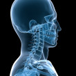 X-ray skeletal neck — Stock Photo