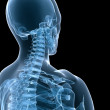 Stock Photo: X-ray skeletal neck