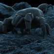 Dust mite - Stock Photo