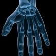 Skeletal hand — Stock Photo