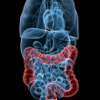 Stock Photo: Highlighted colon