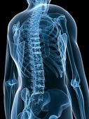 X-ray skeletal back — Foto Stock