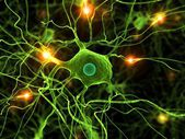 Active nerve cell — Stock Photo