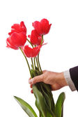 Giving Tulips — Stock Photo