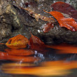 Blurry color leaves in a stream - Stock Photo