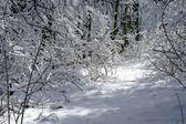 Bäume unter neuschnee — Stockfoto