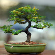 Stock Photo: Bonsai tree