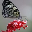 Stock Photo: Schmetterling