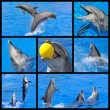 Mosaic fhotos of dolphins — Stock Photo