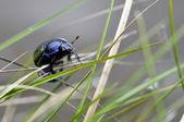 草の中でカブトムシします。 — ストック写真