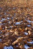 Leaves over the ground — Stock Photo