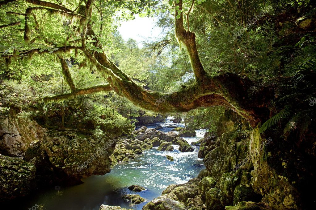 Deep forest and river landscape photo — Stock Photo #2565935